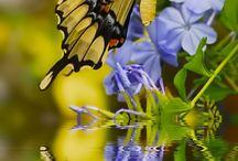 Piękno świata / Kwiaty i zwierzęta