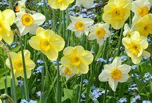 Zahradní kytky