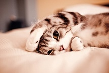 i heart kitties