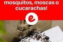 repeler insectos