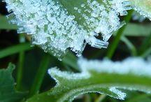 Plants and seasons