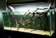 Aquarium stuffs