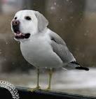 Dog Birds!