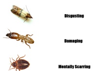 BUGS  around your house or backyard?  Here is help ! / by Marisol Rodriguez