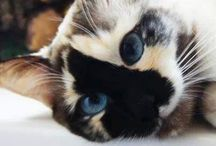 Koty moja milosc i pasja❤