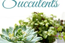 Succulents / Succulents and plants