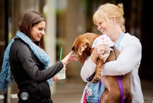 Our 2013 Pet Adoption Event 1.0 / Our Bi-Annual Pet Adoption event at the Plaza at Washington Harbour. / by Coldwell Banker Residential Brokerage | Georgetown