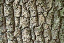 Bark / Tree Bark