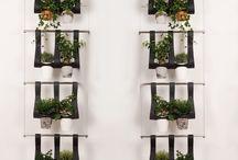 Plantes intérieur  / by Héloïse Dradon