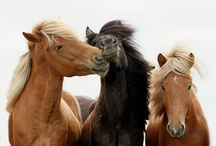 PETS: Horses, Horsing around / Beautiful photos of horses and ponies of all kinds. / by Lilly Calandrello