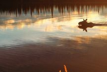 Packraft Hunting / Hunting with a packraft.