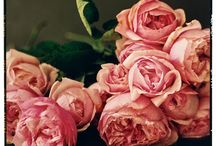 Flowers / David Austin Roses. Simply beautiful for a wedding bouquet or floral arrangement. They smell gorgeous as well.