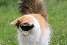 I WAVE MY TAIL IN YOUR FACE