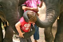 Animal Attractions / Go wild with the wee ones. Animal interactions kids will love.