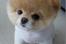 Adorable dog Hair cuts
