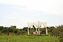 Naibor Camp Maasai Ceremony / Maasai Ceremony