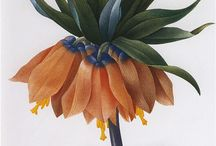 botanik çizimler