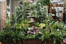In The Garden Shop