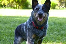 acd - blue & red