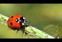 Ladybug Videos