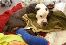 PMAR Blog / Pibbles & More Animal Rescue (PMAR) Blog