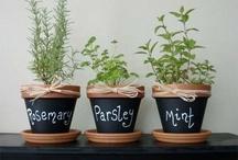 Herb & Succulent wall garden