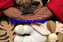 Pug Story