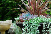 garden n plants