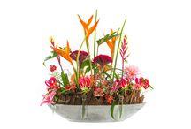 Bloem Flower Factor