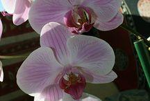 MACRO FLEURS / macrophotographie fleurs