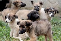 Bosnian Dogs / You can help Bosnian Dogs and animals around the world find homes.