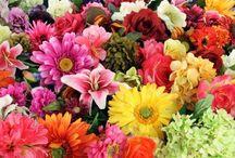Çiçeklerin hangi mevsimlerde açıldıģı