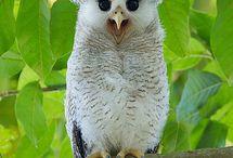 owl-love-u