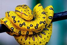 REPTILE SNAKE BY AGABABY