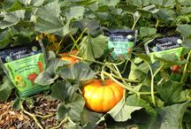 What to Do in the Fall Garden / A thorough fall cleanup and basic soil preparation will ensure a healthy, vibrant garden in the spring.