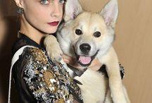 glamour life a sei zampe! / Anche le star amano i nostri fantastici amici a 4 zampe. Un tocco di glamour colora la dog life..
