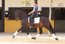 Baroque Horses & Equestrian
