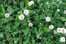 Herbarium maartje