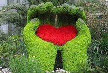 Jardín de jardinería