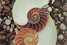 Aquatic Nocturne / (Sylvia Plath) Oceanic Respiration