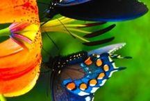 butterflies / by Lesia Stuckey