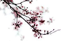 Flowers on my mind...