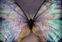 IIDESCENT/HOLOGRAM / iridescent