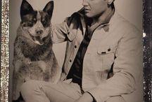 cães e artistas