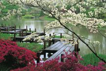 Garden-water features, pools / Waterfalls, ponds,lakes,pools, streams in the garden