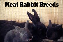 Rabbits / by Dawn Fair