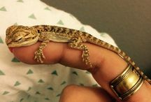 Teeny Tiny Pets / The Cutest, Tiniest Pets That You Can Carry Around On Your Finger