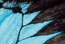 nature, wings, birds