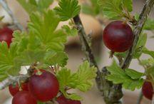 Herbs and edible plants