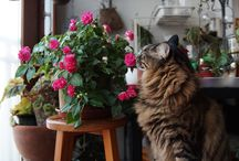 첫번째 고양이 아민 / 반려고양이중에서 첫번째인 아민군의 생활모습